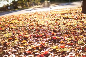 Autumn Leaves by DylserX