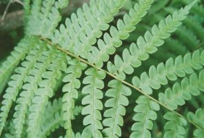 Fern by ManicMechE