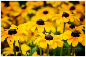 ...flowers... by MartenD