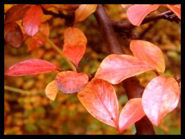 Warm autumn by What-is-worth