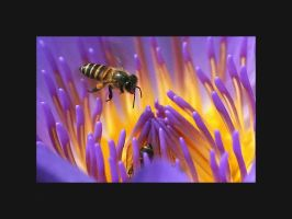 Bee Photo 14 by blookz