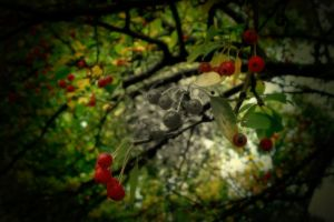 Berries and Branches by belxfran-desu