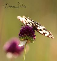 Poised for Flight by DYWPhotography
