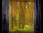 In the Mystery of the Amber Forest by SineLuce