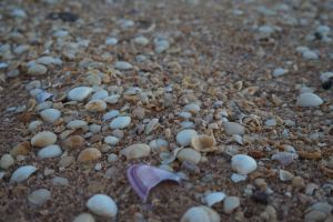 Beach Shells by Epelini