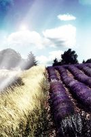 Light On Lavender Fields. by caffeine-overdosed