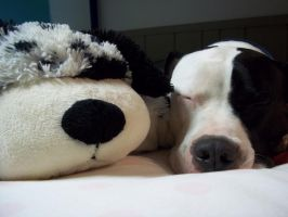 pillowpet plus pibble-pet equals love by Coloran
