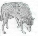 Gray Wolf by Timberwolf9