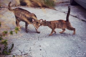 Kitty Love by MarinaCoric
