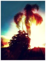 Vintage Sunset by byCavalera