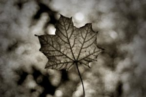leaf. by Morfins