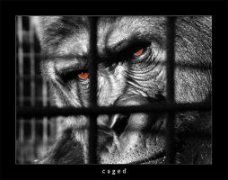 Caged by MarkioS14