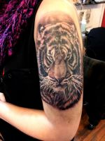 Tigre Tattoo black and grey by 2gc