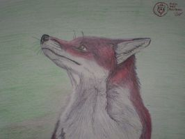 Red Fox by dingo-murci