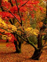 Autumn Beauty by parallel-pam
