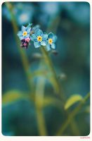 Forget me not - 10 by anjali