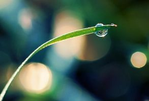 droplet by MaraDamian