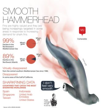 Smooth Hammerhead - victim of sharkfin soup by memuco
