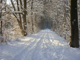 Snowy Path Stock- 3 by Crystelly