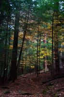 Fall Forest 2 by Salamander-Stock