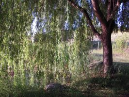 Weeping Willow Stock 3 by SimplyBackgrounds
