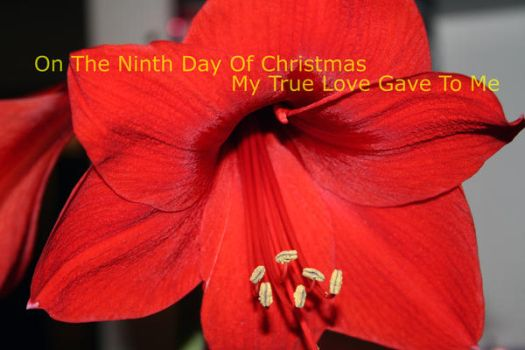 2009 9th Day of Christmas by 7x7