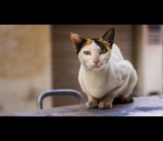 Urban Cats - 25 by MARX77
