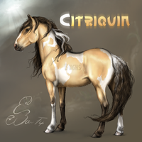 Citriquin by BUGHS-22