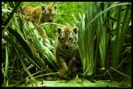 Twins Exploring by In-the-picture