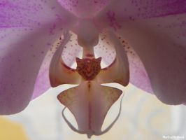 Orchidea. by VivZombie