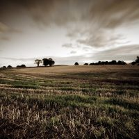.: The Fallow Land :. by Dave-Ellis