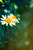 Margriet by xmarvel