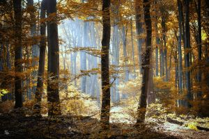 Morning Light by ildiko-neer