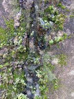 Free photo texture - Moss in frozen ice #3 by croicroga