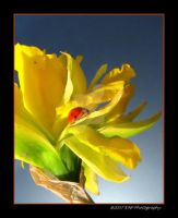 Spring Lady 3 EDIT by picworth1000wrds