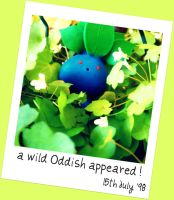 a wild Oddish appeared by 0----0