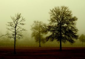 Country Morning by underdogg101