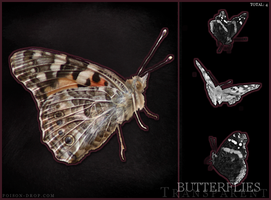 Transparent Butterfly Stock by poisondropstock