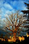 The Old Black Walnut Tree by EarthHart