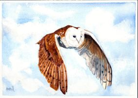 Barn Owl by Dabull04