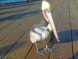 Pelican on the Pier by NodokaVisualArts