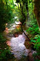 Misty Stream by Hollys-Critters