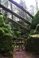 Puzzlewood 2 by JWBeyond
