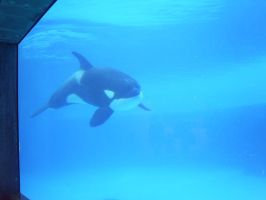 Orca by Joey1992911