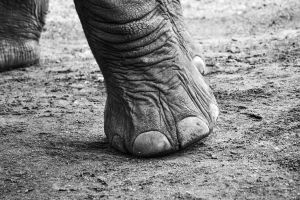 The Elephant Sanctuary 04 by RichardGeorgeDavis