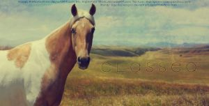 C l a s s e q by EquideDesigns