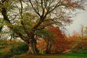 Autumn in Belvoir Forest 2009 by Gerard1972