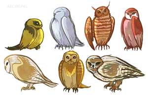 Bunches of Owls by dolphinabottle