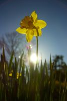 First signs of Spring-April 2012 by masseffect34