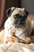 Pug and Friend by garnettrules21